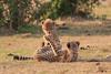 Cheetah_Cubs_Mara_Kenya_Asilia_20150215