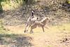 Cheetah_Cubs_Mara_Kenya_Asilia_20150052