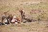 Cheetah_Feast_Mara_Kenya_Asilia_20150128