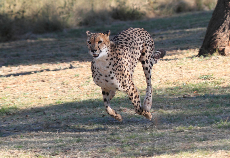 Cheetah Centre South Africa