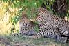 Cheetah_Cubs_Mara_Kenya_Asilia_20150039