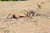 Cheetah_Feast_Mara_Kenya_Asilia_20150046
