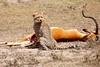 Cheetah_Feast_Mara_Kenya_Asilia_20150033