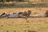 Cheetah_Cubs_Mara_Kenya_Asilia_20150192