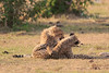 Cheetah_Cubs_Mara_Kenya_Asilia_20150211