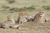 Cheetah_Family_Portraits_Mara_Kenya_Asilia_20150024