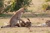 Cheetah_Cubs_Mara_Kenya_Asilia_20150204