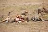 Cheetah_Feast_Mara_Kenya_Asilia_20150116