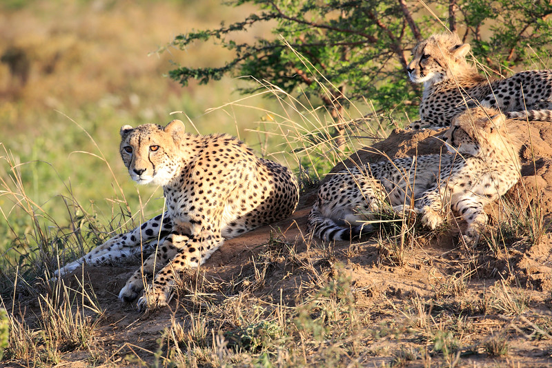 Cheetah_Adventure_Phinda_2016_0003