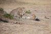 Cheetah_Cubs_Mara_Kenya_Asilia_20150121