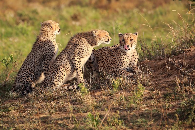 Cheetah_Adventure_Phinda_2016_0027