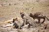 Cheetah_Feast_Mara_Kenya_Asilia_20150013