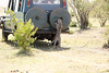 Cheetah_Family_Vehicle_Mara_Kenya_Asilia_20150018