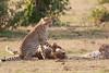 Cheetah_Cubs_Mara_Kenya_Asilia_20150203
