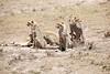 Cheetah_Feast_Mara_Kenya_Asilia_20150018