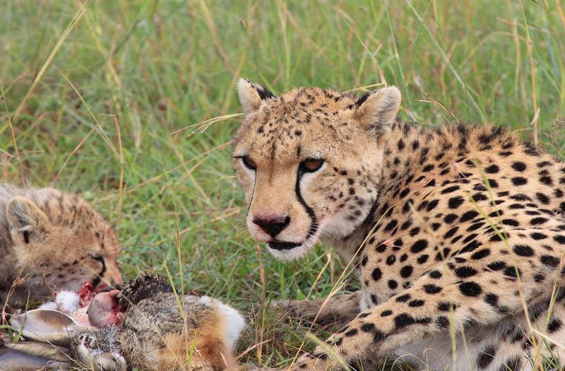 Cheetah Cub Mom Mara Topi House
