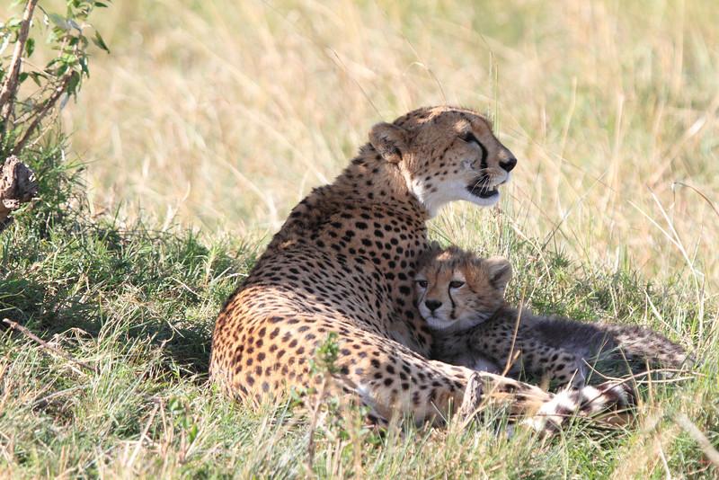 Cheetah Cub Mara Topi House