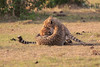 Cheetah_Cubs_Mara_Kenya_Asilia_20150213
