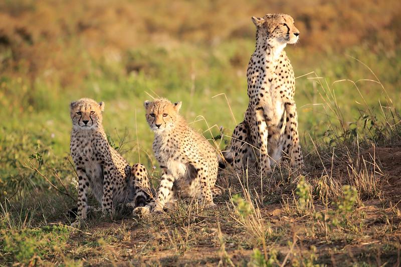 Cheetah_Adventure_Phinda_2016_0048