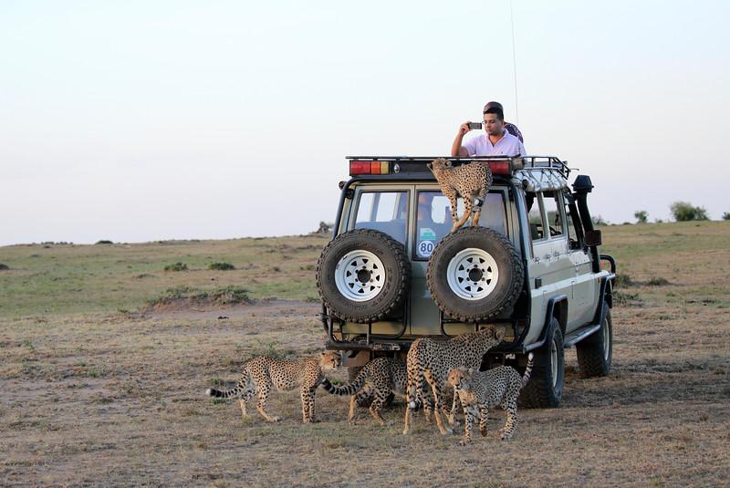 Cheetah_Family_Vehicle_Mara_Kenya_Asilia_20150003