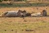 Cheetah_Cubs_Mara_Kenya_Asilia_20150200