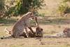 Cheetah_Cubs_Mara_Kenya_Asilia_20150205