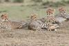 Cheetah_Family_Portraits_Mara_Kenya_Asilia_20150039