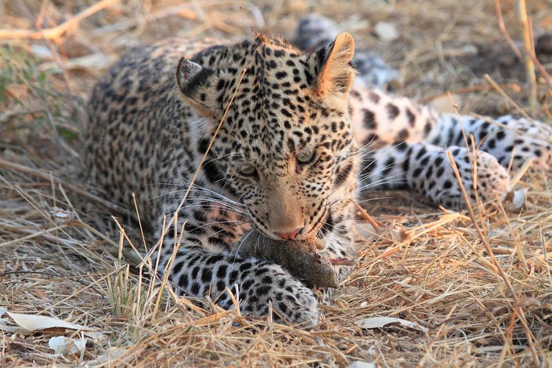 Leopard_Squirrel_Mashatu_Botswana0070