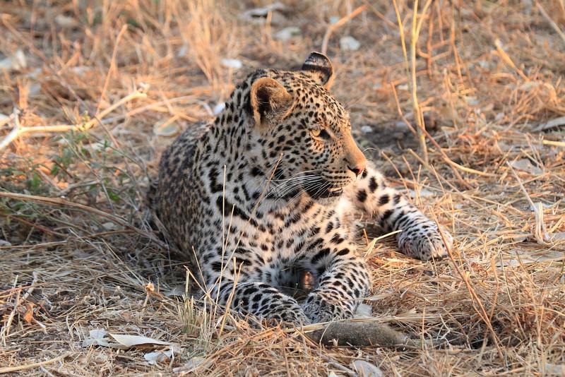 Leopard_Squirrel_Mashatu_Botswana0026