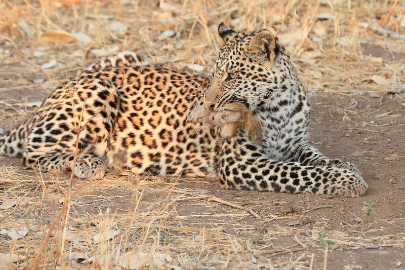 Leopard_Squirrel_Mashatu_Botswana0003