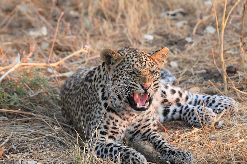 Leopard_Squirrel_Mashatu_Botswana0085