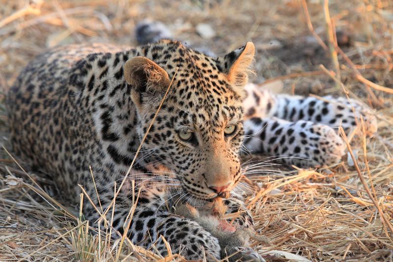 Leopard_Squirrel_Mashatu_Botswana0064