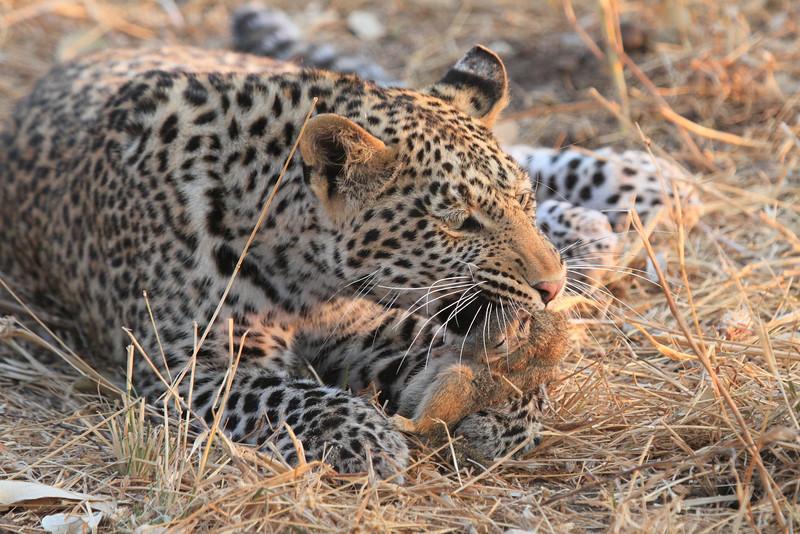 Leopard_Squirrel_Mashatu_Botswana0051