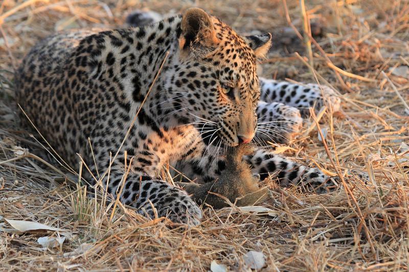 Leopard_Squirrel_Mashatu_Botswana0042