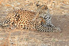 Leopard_Squirrel_Mashatu_Botswana0002