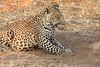 Leopard_Squirrel_Mashatu_Botswana0004