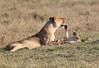 Mara Lions0700