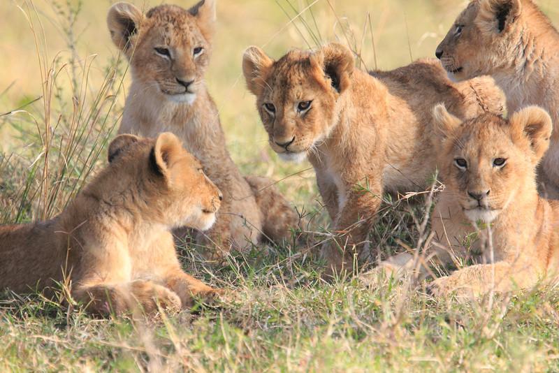 LionCubAndFamilyMorning0175
