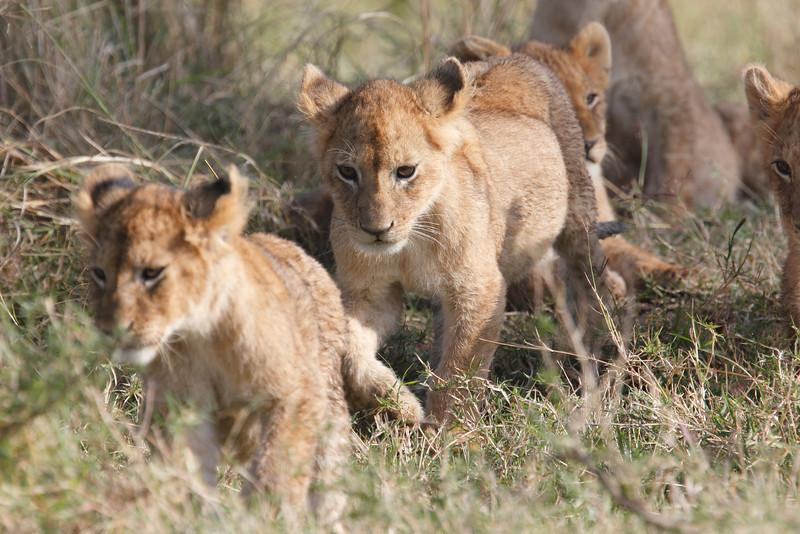 LionCubAndFamilyMorning0176