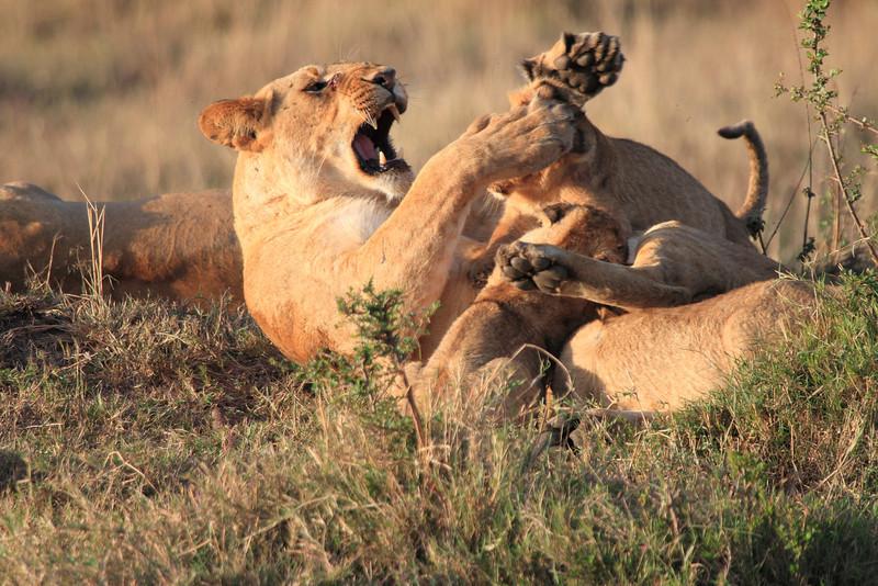 Mara Lions0705
