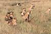 Lion Pride Mara Topi House