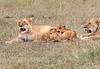 Lion Cubs Family Mara Topi House