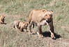 Lion Cub Family Mara Topi House