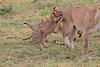 LionCubAndFamilyMorning0087