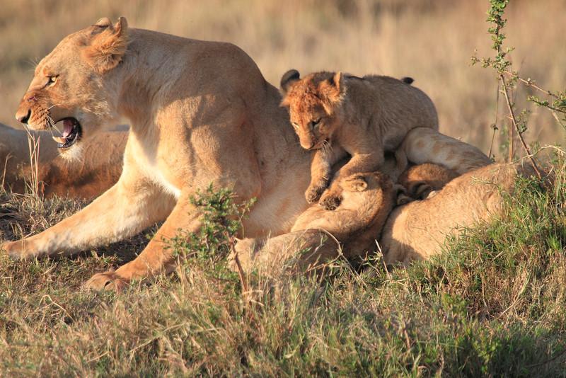 Mara Lions0707