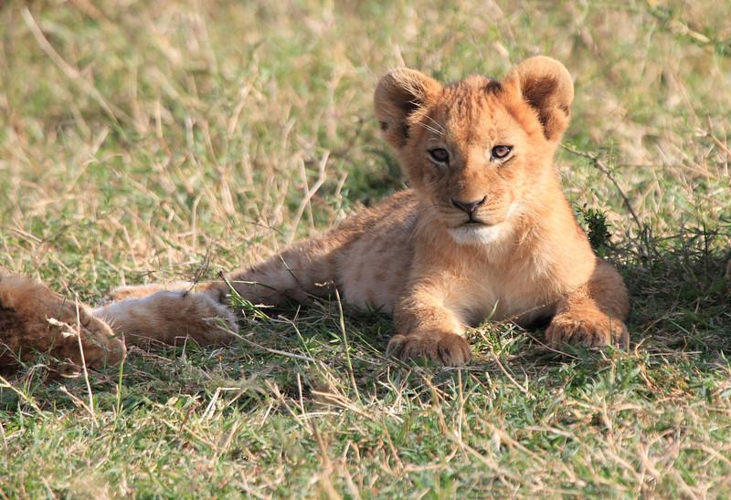 LionCubAndFamilyMorning0171