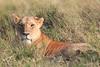 LionCubAndFamilyMorning0173