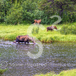 Pond Moose