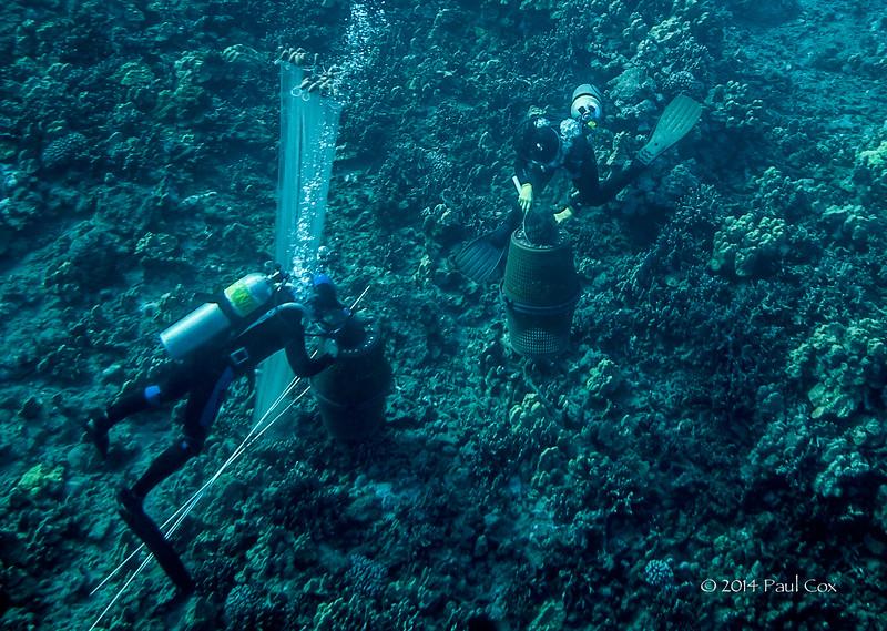 Aquarium fish Collectors in Papa Bay, Hawaii