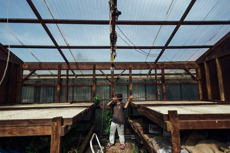 Lorie Obra rakes drying coffee beans on her farm in the Ka'u district of the Big Island of Hawai'i. Obra founded Rusty's Hawaiian Coffee with her late husband.